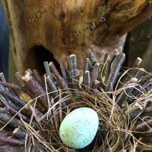 Egg Nest