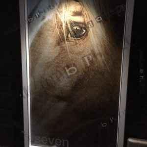 Framed Horse Eye